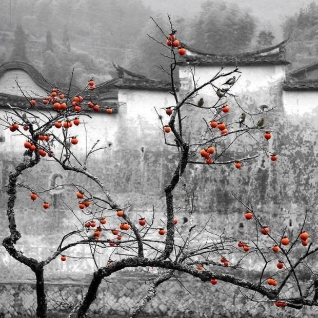 esperanca-zhengrong-zhang